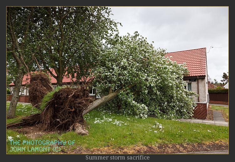 Fallen tree, nobody harmed