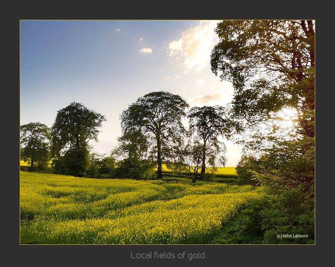 Clackmannanshire fields of gold