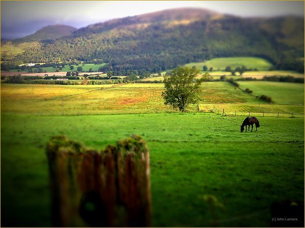 Horse in the fields below The Ochils