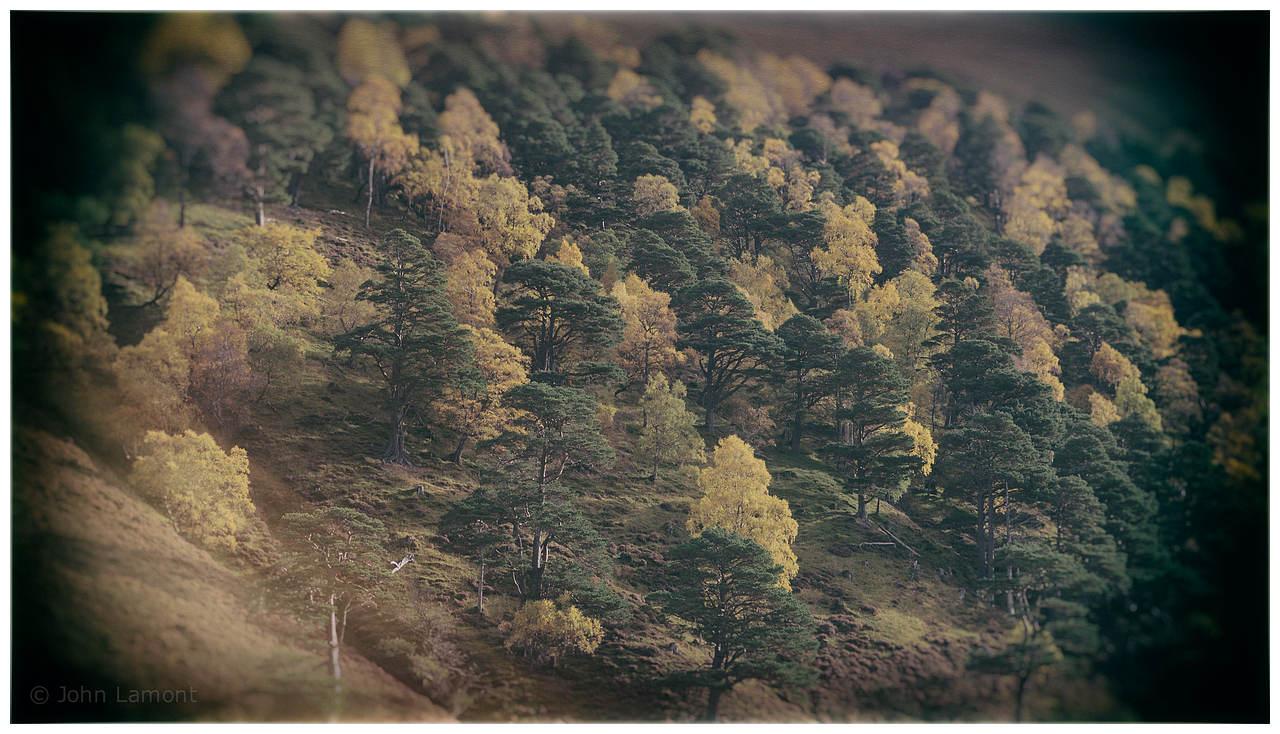 Autumn, Glen Feshie