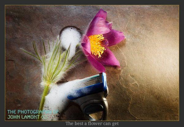 Shaving plants
