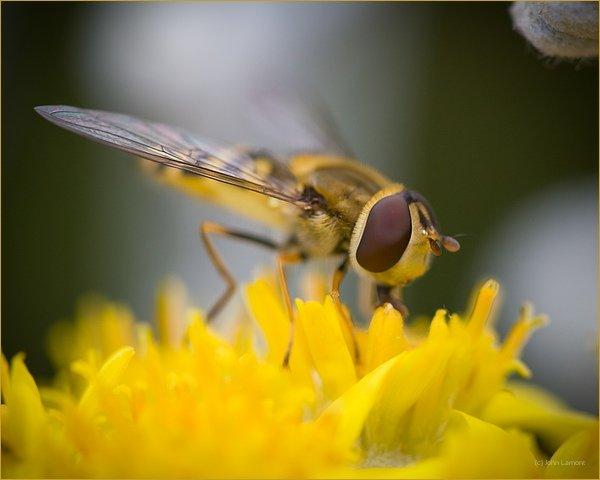 Wasp feeding on nectar from flower