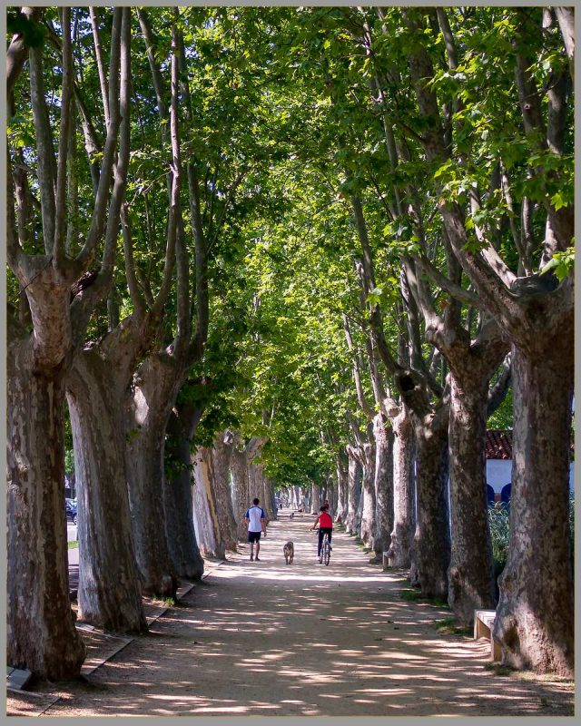 Stroll along tree avenue, Banyoles