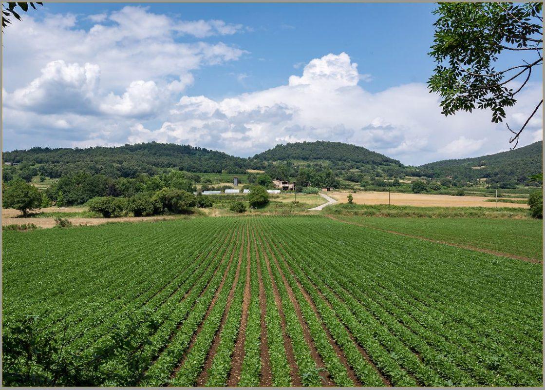 Fields of la Garrotxa